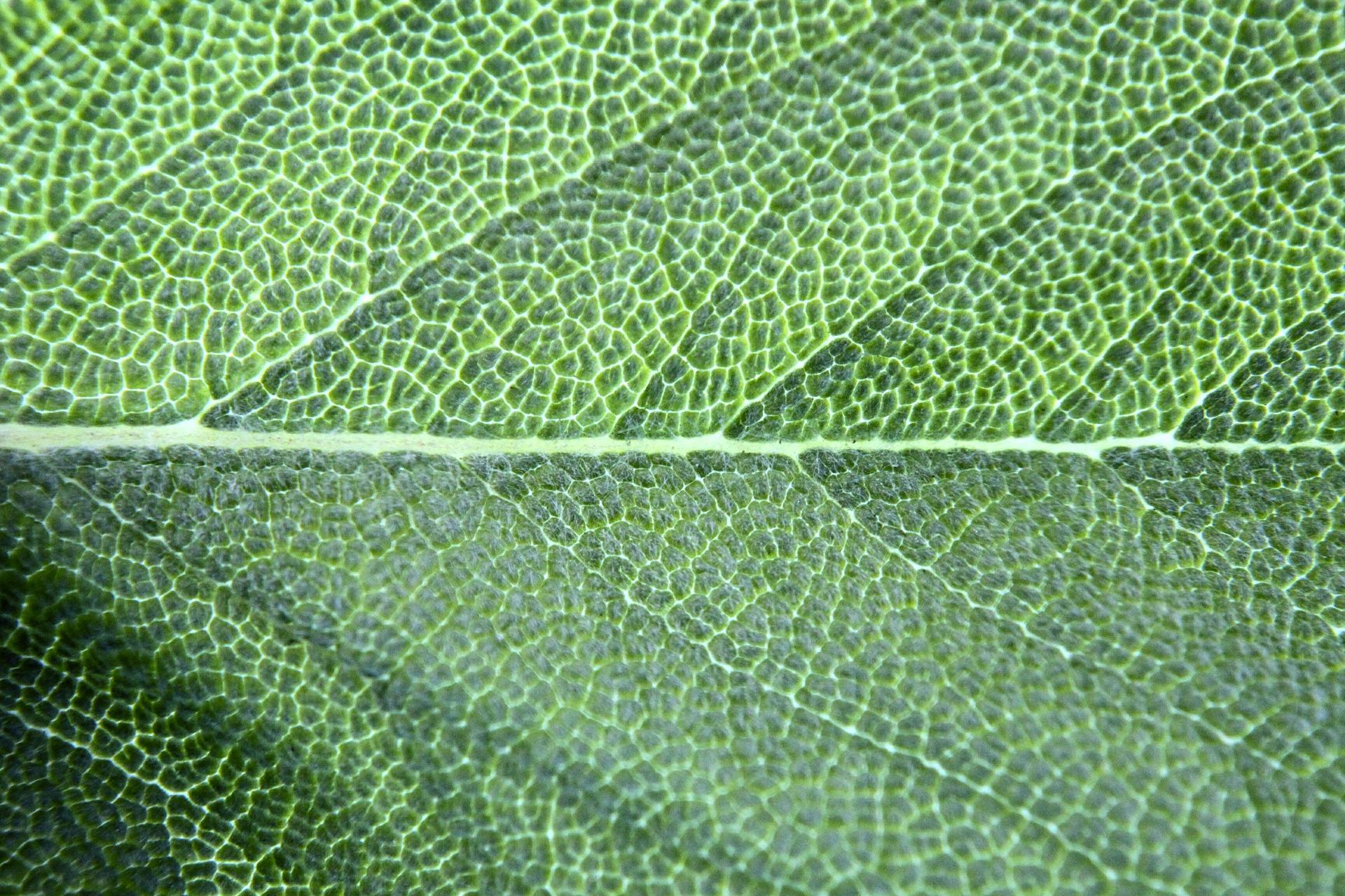 chlorophyll-574998_1920