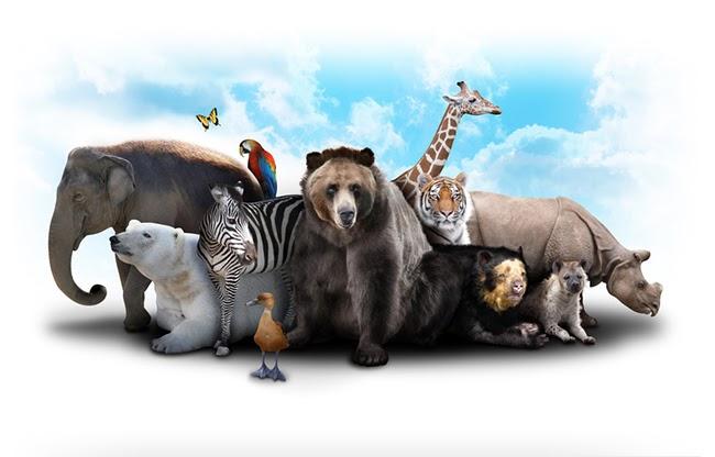 somdocents-animals-en-perill-d'extinció-foto-animals